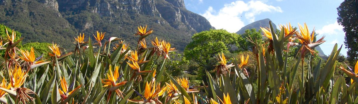 Table Mountain Kirstenbosch stay at villa la Baia luxurious rental in Camps Bay